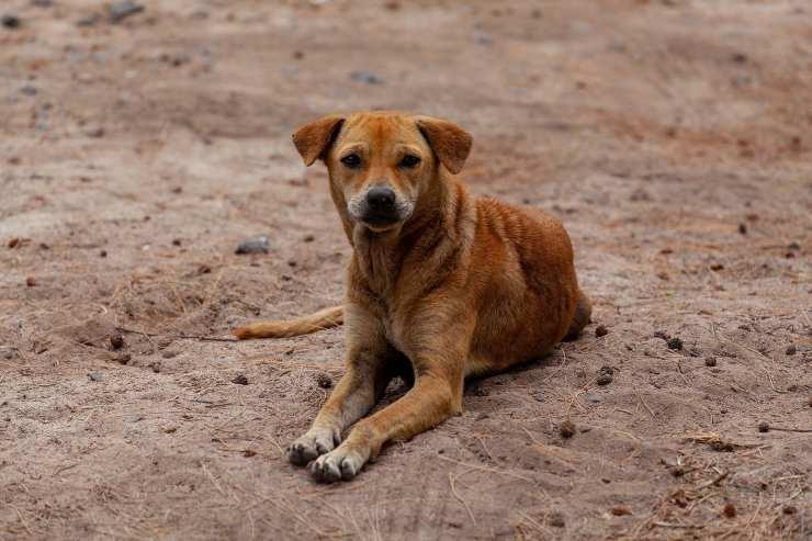 L'espressione del cane randagio (Foto Pixabay)