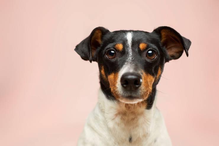 La cura per i cani