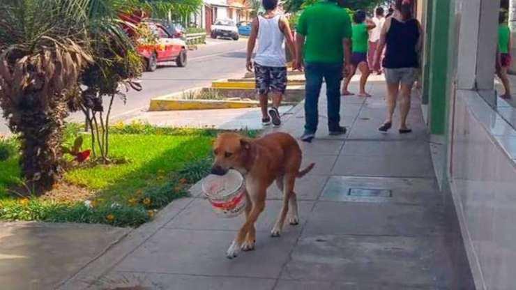Cane randagio cerca acqua (Foto di dominio pubblico)