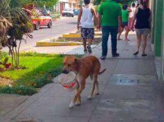 Il cane vaga con una ciotola (Foto di dominio pubblico)