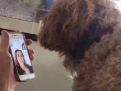 Videochiamata tra Moxie e Katie (Screen video Instagram)