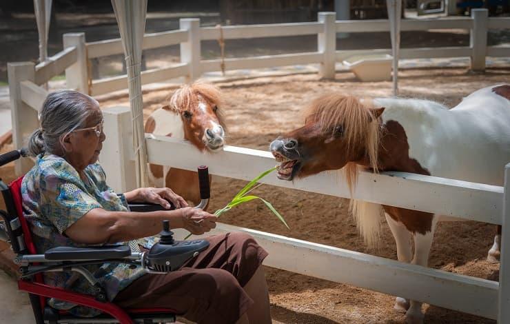 persona anziana cavallo