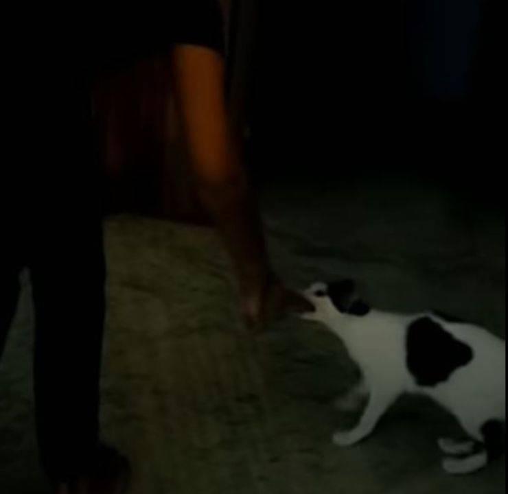 mamma gatta proprietario mano video