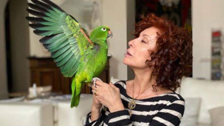 Alda D'Eusanio pappagallo