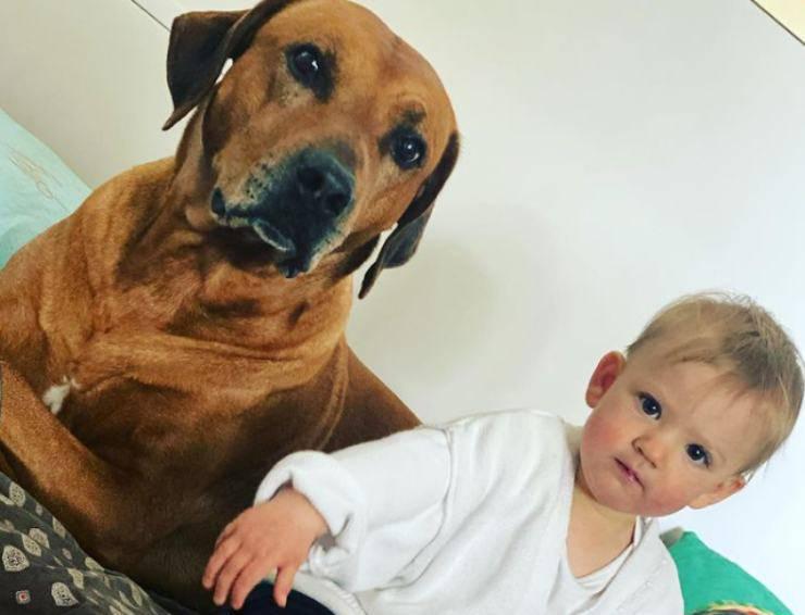 Sprint, il cane di Alena Seredova