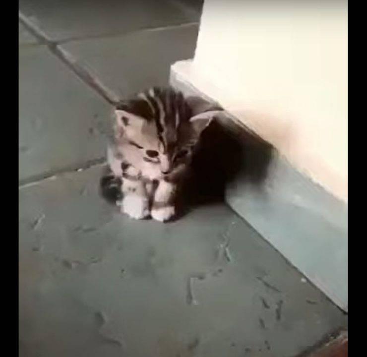 gatto conforta fratellino solo