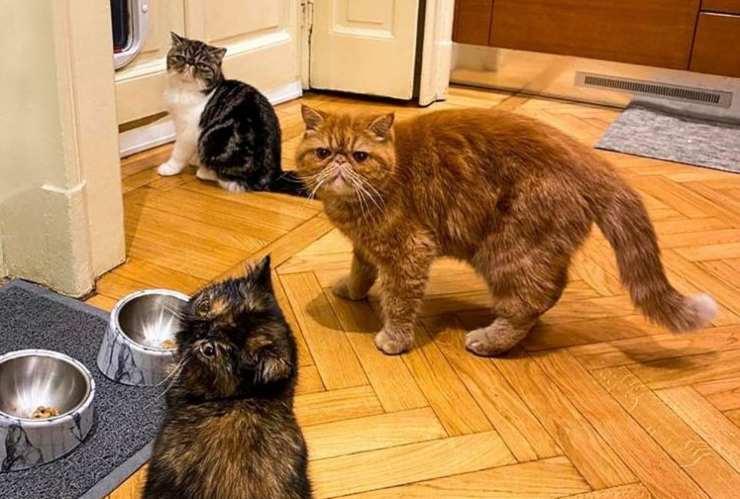 I gatti di Alessandro Borghese