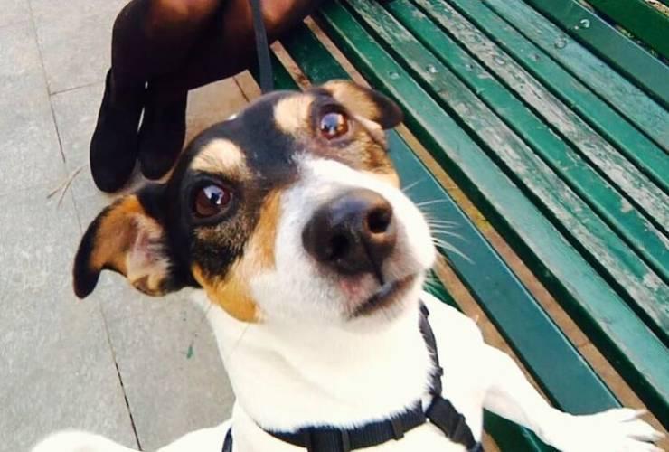 Hugi, il cane di Simona Ventura