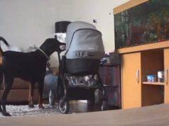 cane calma neonata giocattolo