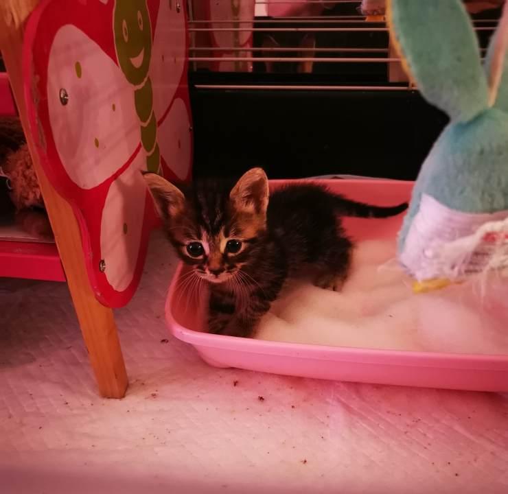 gattini scatola scritta