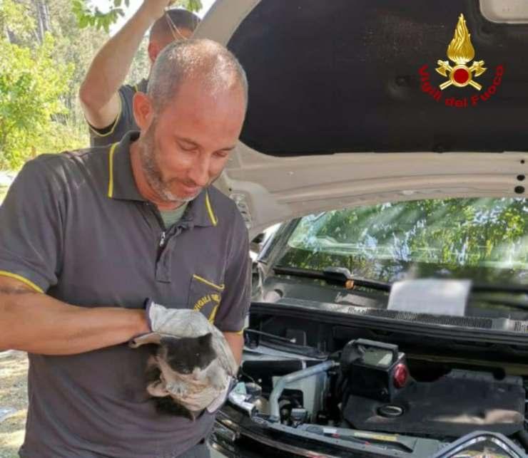 bambina gatto intrappolato auto
