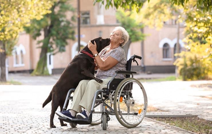 anziano carrozzella cane