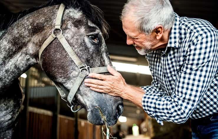 cavallo con persona anziana