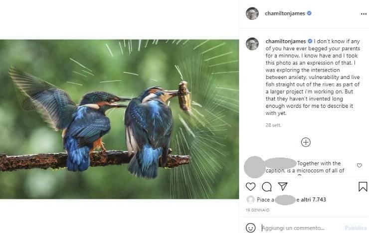 fotografie uccelli