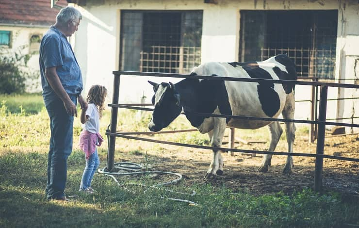 giornata persone anziane nonno bambina mucca