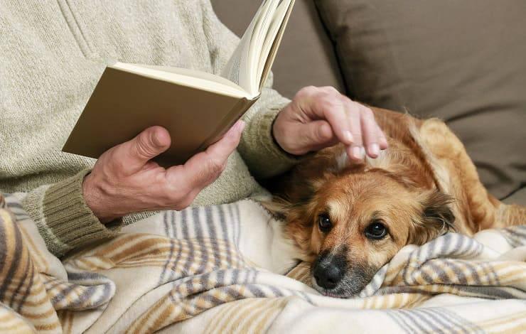 giornata persone anziane carezze cane