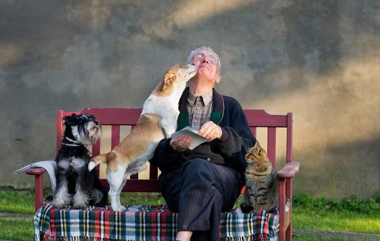 persona anziana gatto cani
