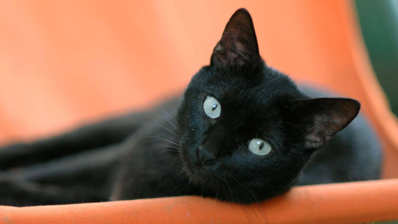 Esiste l'Anagrafe felina in Piemonte?