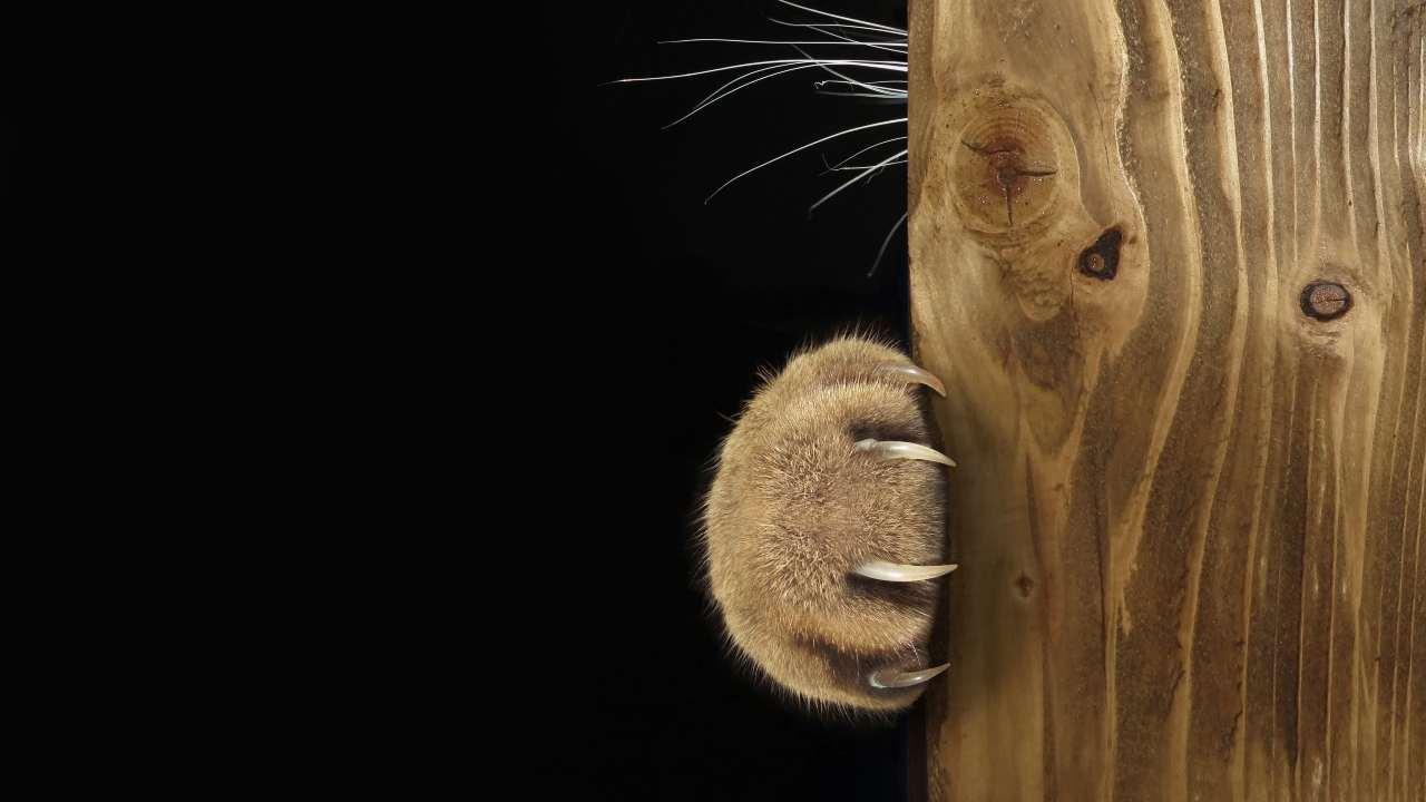 Calzari antigraffio per il gatto