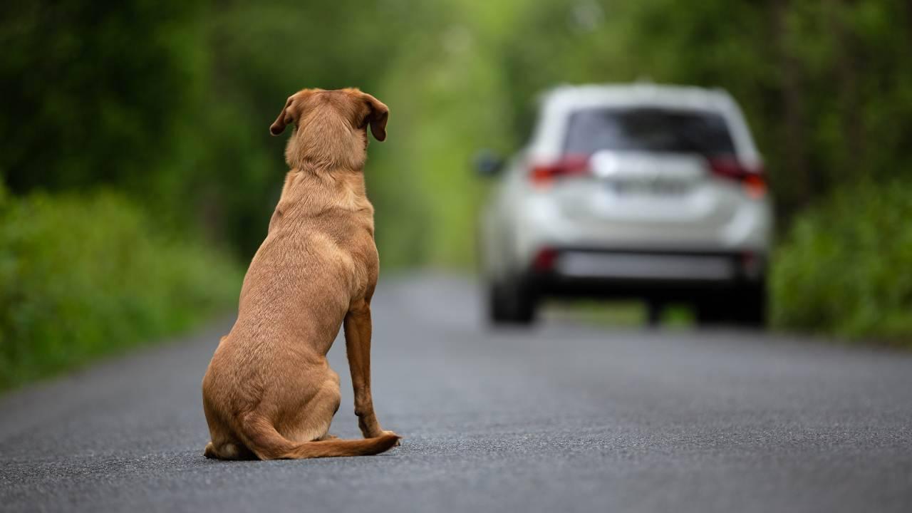 Cosa rischia chi abbandona un cane