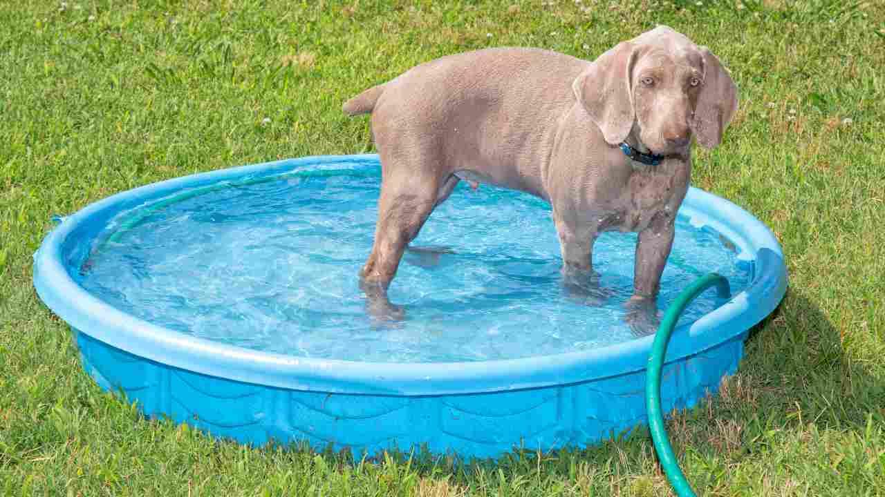 Come scegliere la piscina per il cane