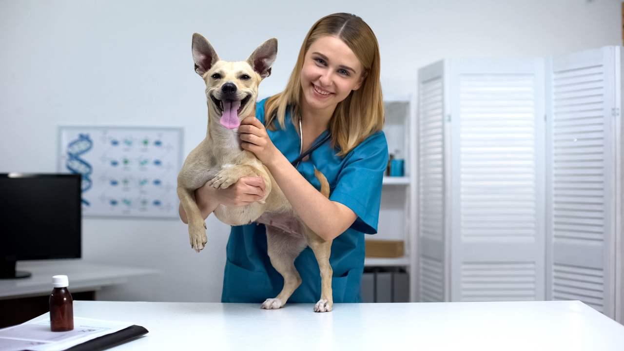 Differenze tra cane intero e cane sterilizzato