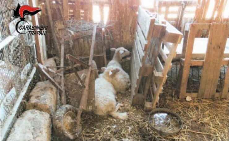 Alcuni degli animali sequestrati a Trapani (Screen Facebook)