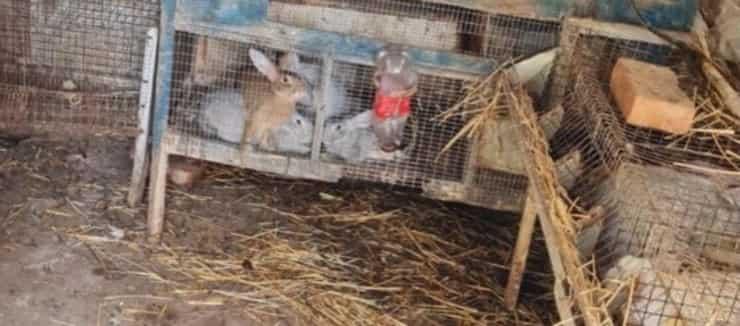 Alcuni dei conigli posti sotto sequestro a Trapani (Screen Facebook)