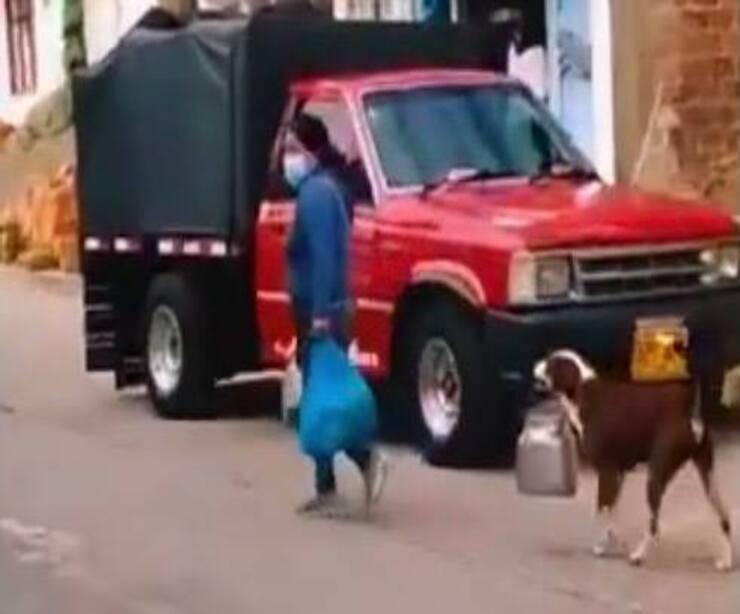 Cagnolino aiuta con la spesa la sua padrona (Screen video Youtube)