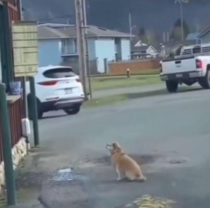 Cagnolino aspetta il suo cibo (Screen video Tik Tok)