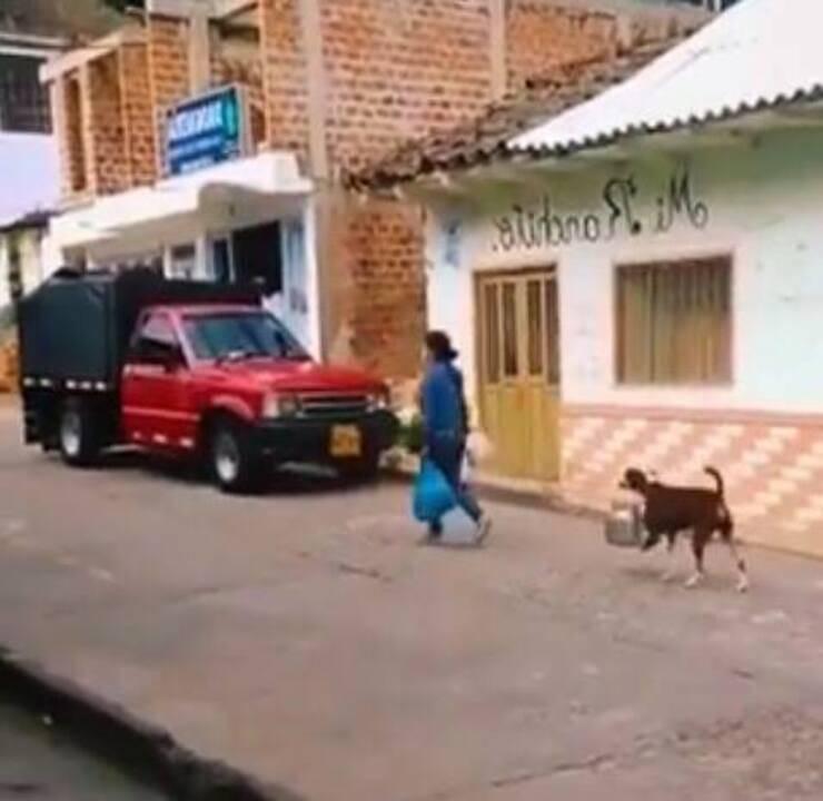 Cagnolino segue padrona (Screen video Youtube)