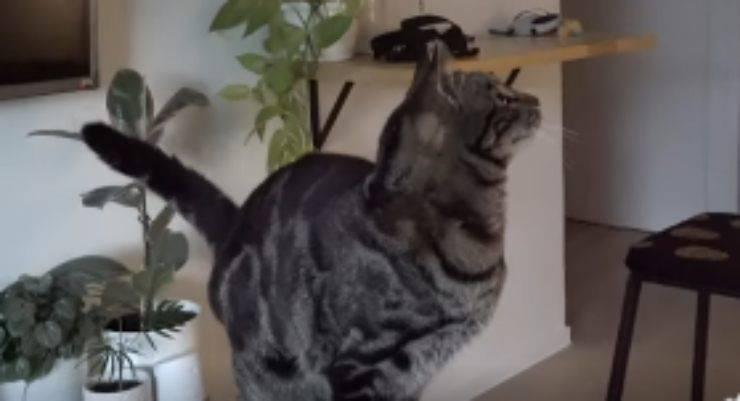 Micio seduto (Foto video)