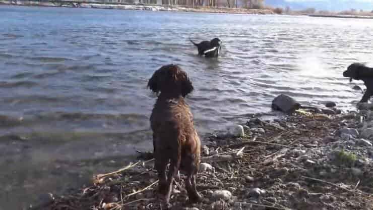 Cuccioli durante il loro primo anno di vita (Screen video Youtube)