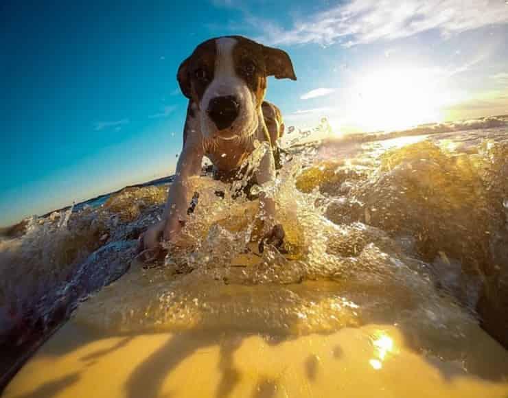Cucciolo in vacanza (Pixabay)