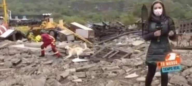 Durante la diretta il divertente siparietto tra pompiere e cane (Screen video)