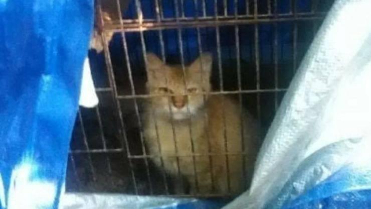 Gattino triste (Foto di dominio pubblico)