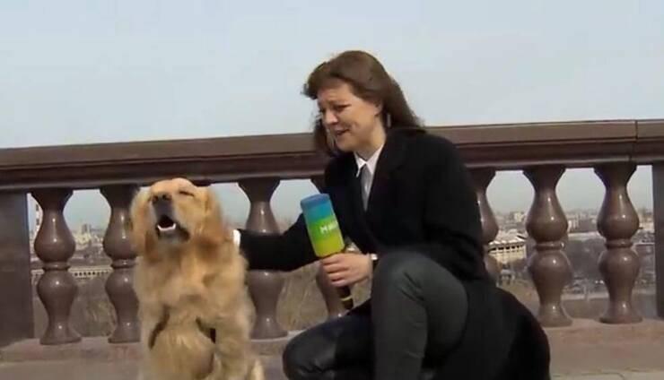 Giornalista insieme al cucciolo (Screen video Youtube)