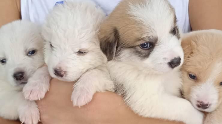 Quattro Cuccioli Cane Cercano Casa