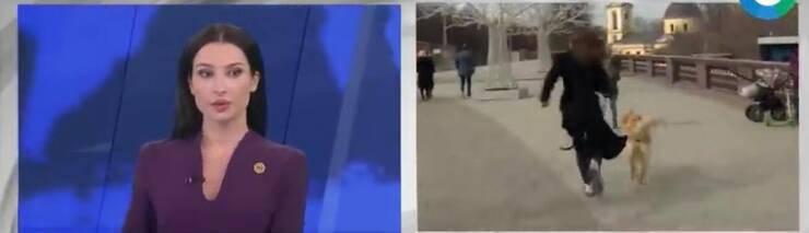 In diretta la giornalista insegue il cucciolo che le ha rubato il microfono (Screen video Youtube)