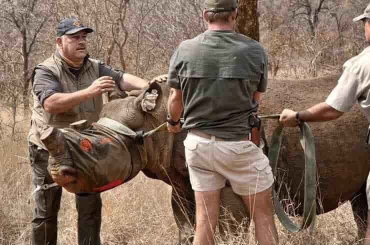 Johan Marais e il suo team di veterinari salva un rinoceronte (Screen Facebook)