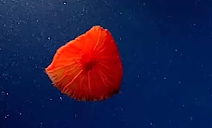 Rara Medusa Rossa Video