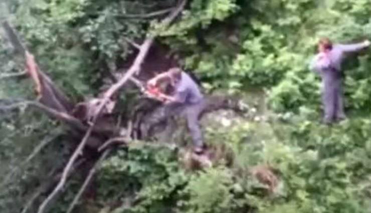 Orso Impigliato Albero Salvataggio Video