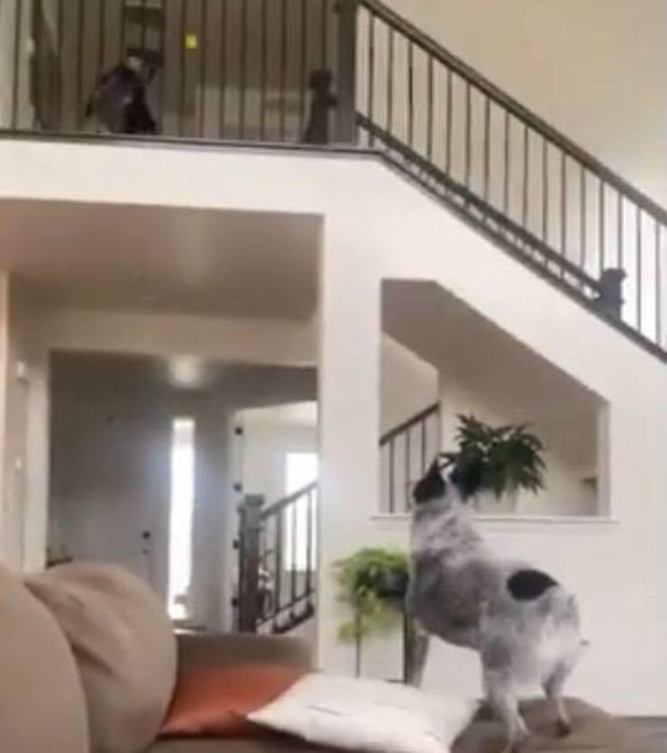 Leyla e Bear giocano al riporto a modo loro (Screen video Youtube)