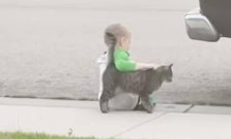 Gatto Consola Bambino Marciapiede Video