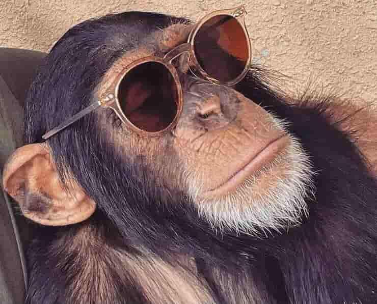 Limbani con gli occhiali da sole (Screen Instagram)