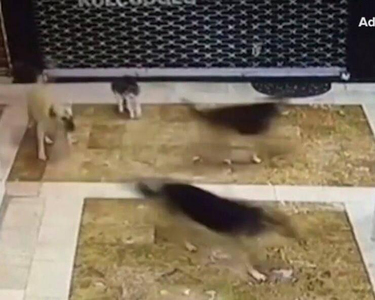 Mamma gatta salva gattino da attacco cani (Screen video Youtube)