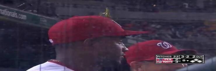 Mantide religiosa sul cappello di Victor Robles (Screen video Twitter)