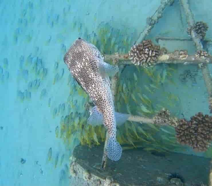 Pesciolino accompagna sub nelle sue immersioni (Screen video Instagram)
