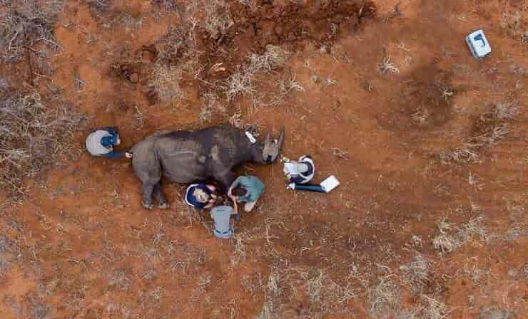 Salvataggio rinoceronte (Screen Facebook)