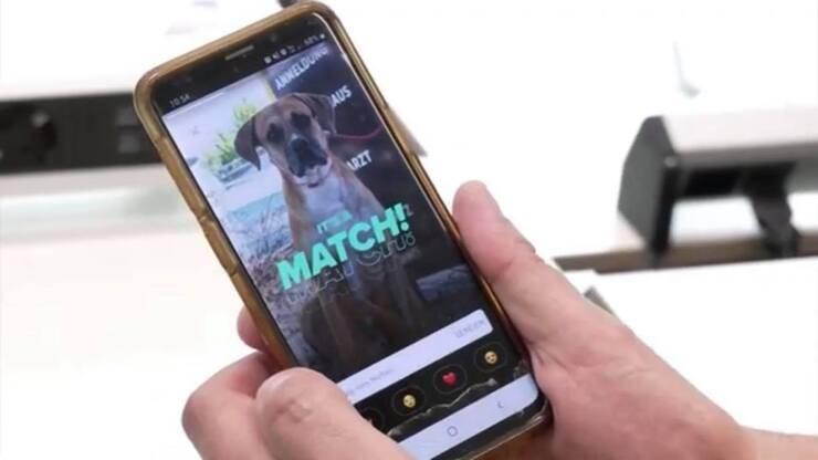 Un nuovo modo per adottare gli animali su Tinder (Screen video Youtube)